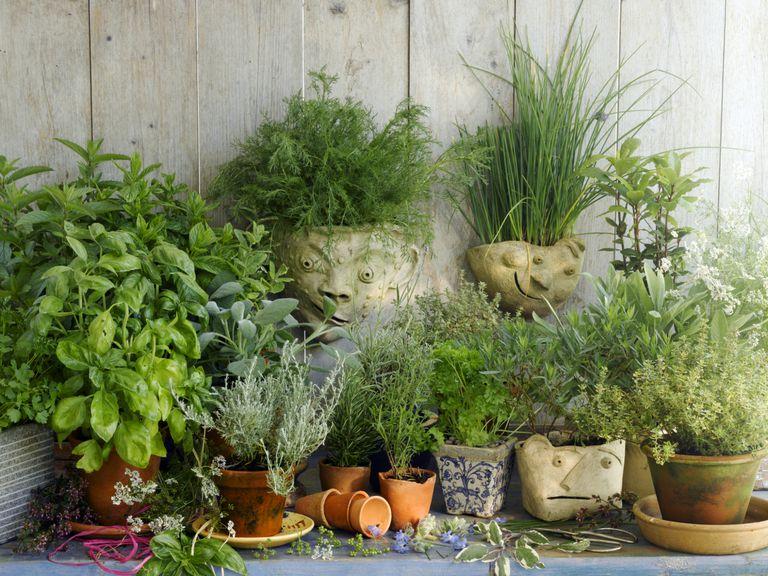 10 tipos de plantas m s comunes for Plantas ornamentales mas comunes