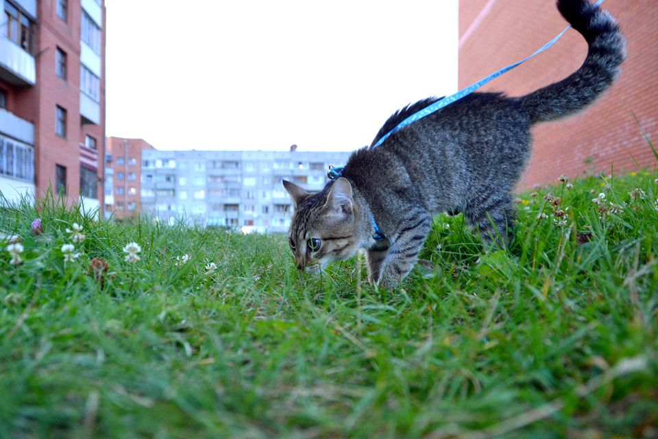 Cat On Grassy Field By Buildings Against Clear Sky