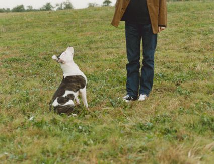 how to train a dog to shake hand