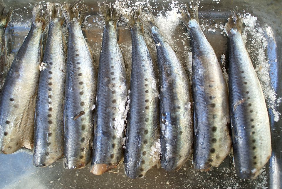 Image of Sardines Curing