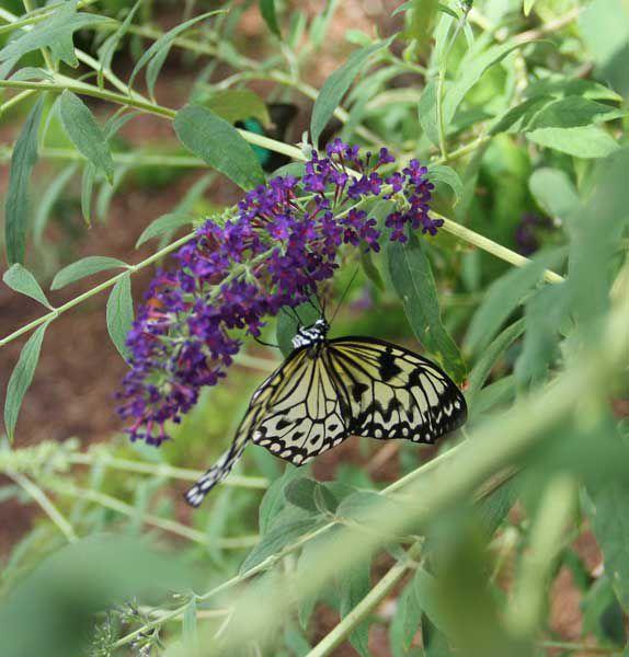 Butterfly Wonderland in Scottsdale Arizona