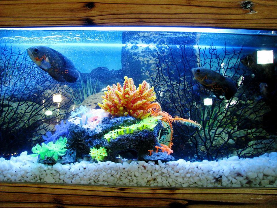 home fish tank aquarium