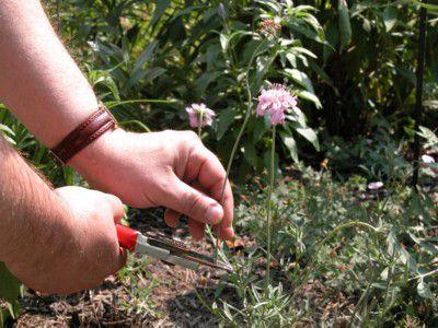 Pruning Flower Stems