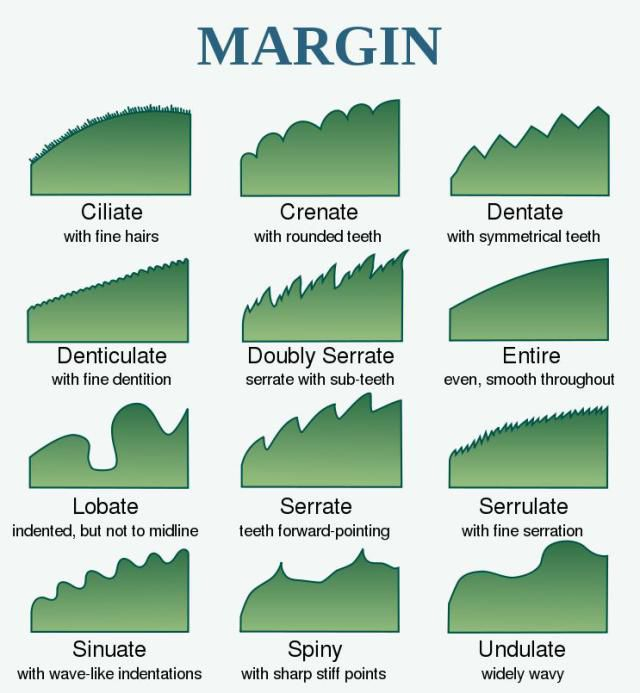 how to work out margin
