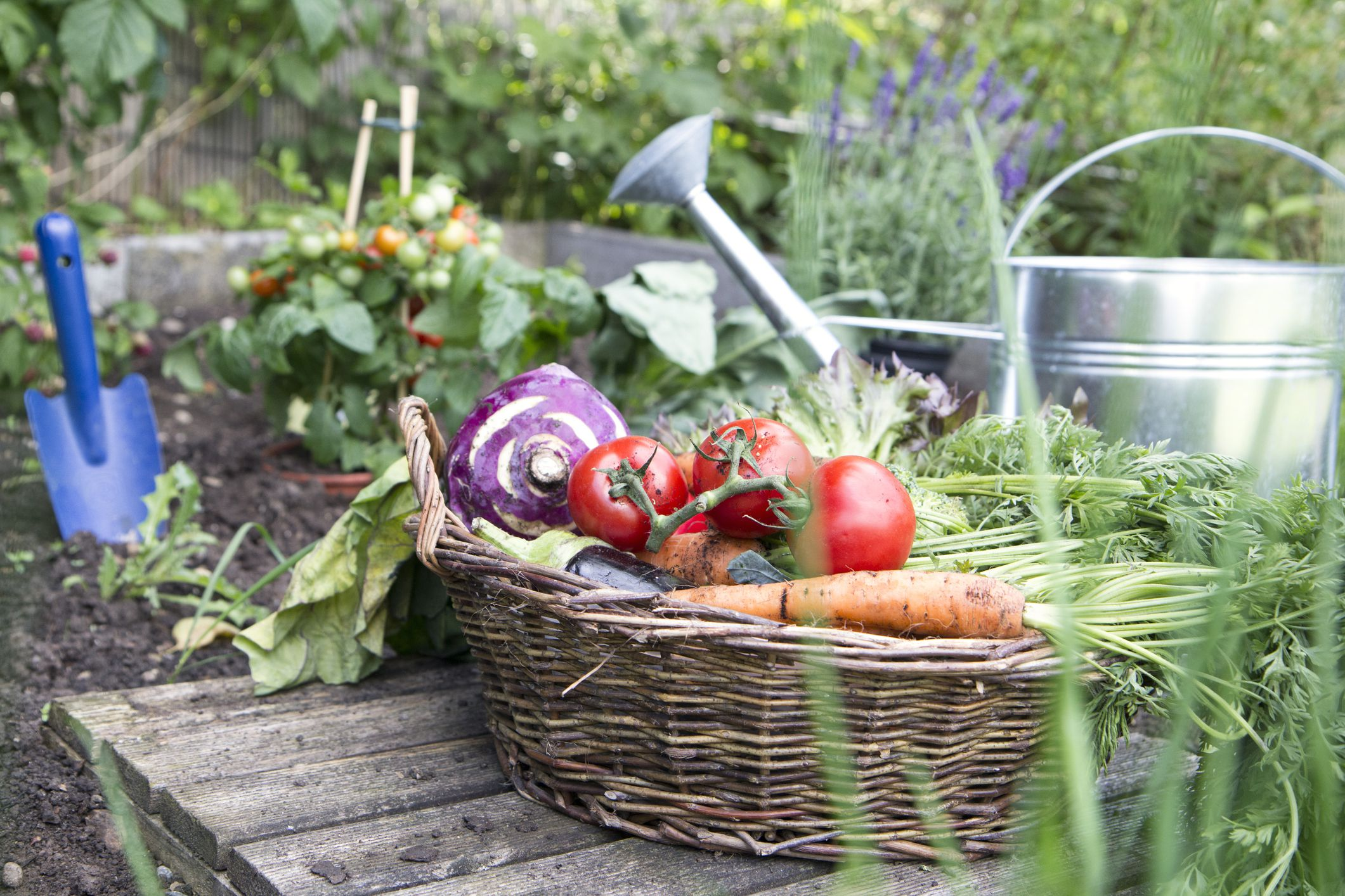 July Gardening Tips For Your Home