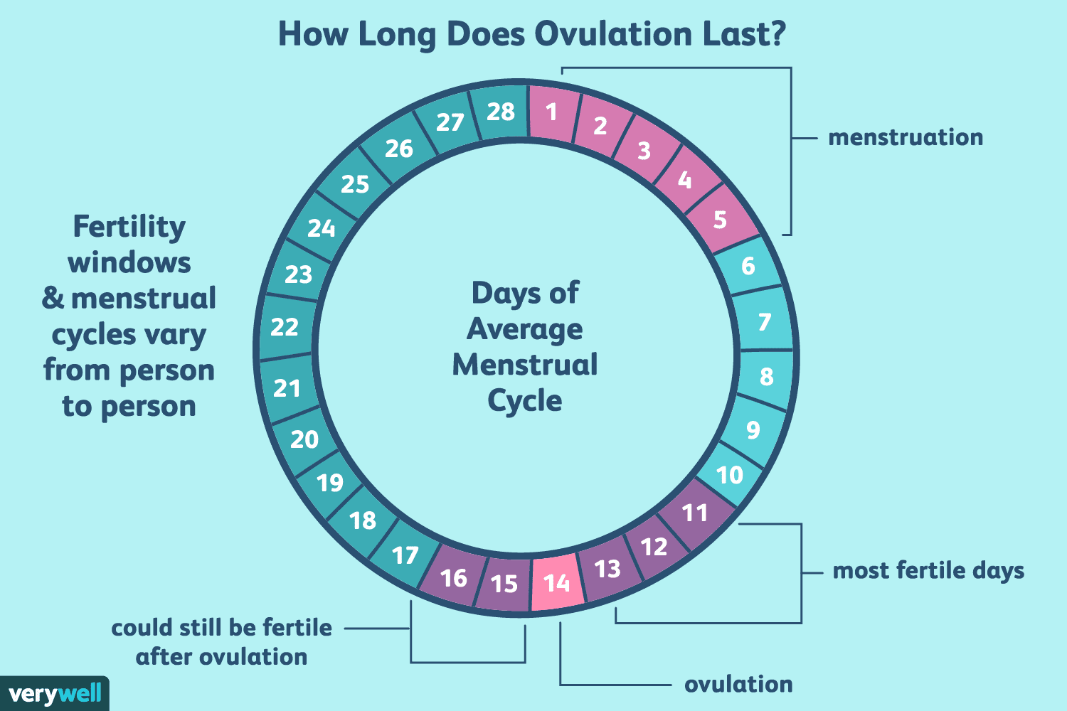 How Long Does Ovulation And Your Fertile Window Last-4459