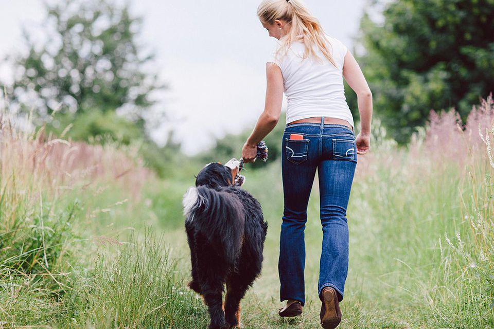 How To Train A Dog To Heel While Walking