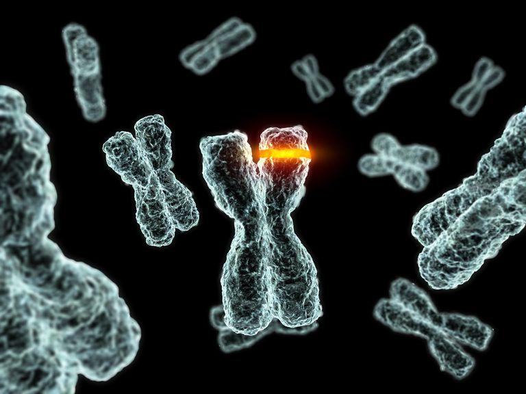 chromosome.jpg