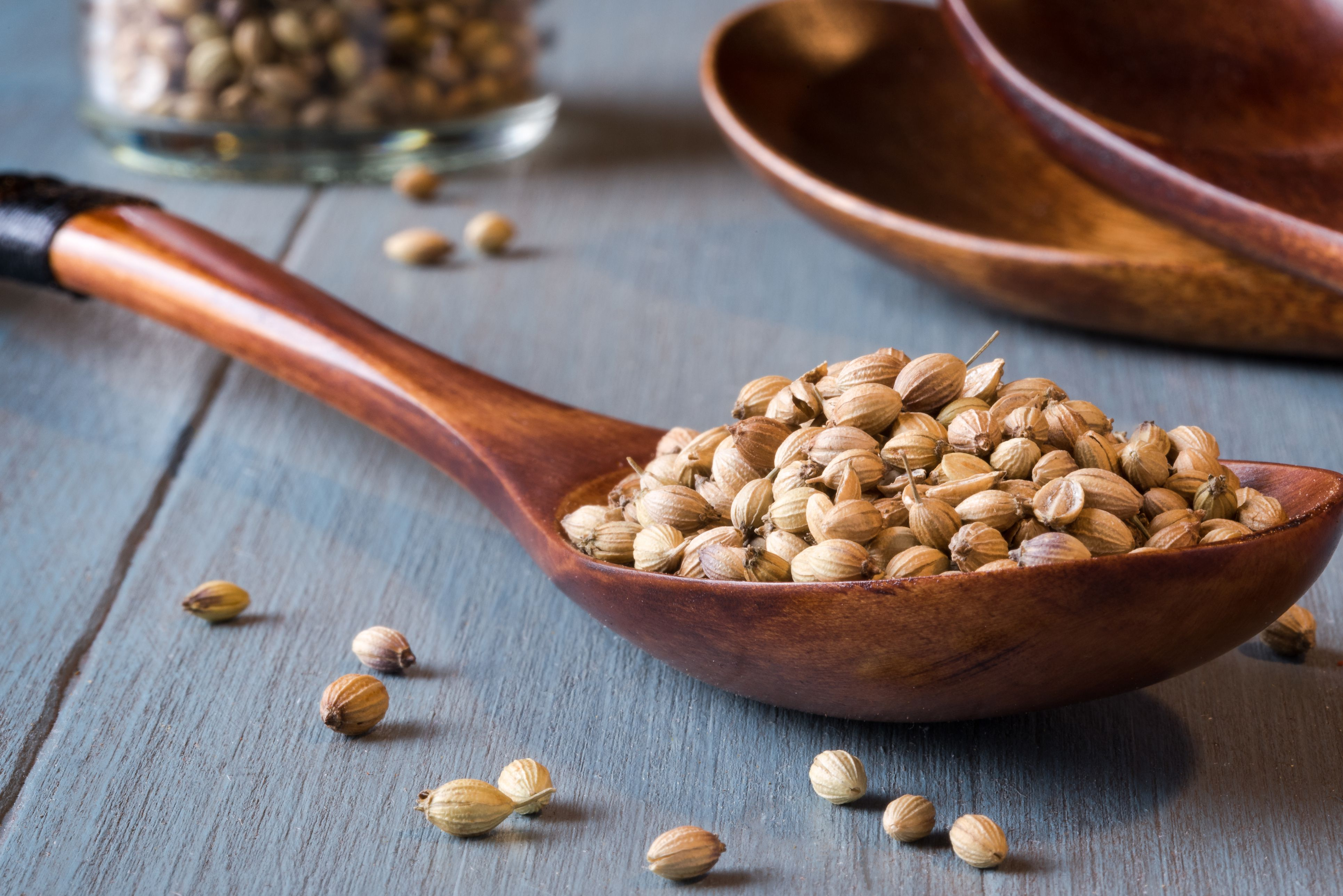Coriander Definition And Culinary Uses