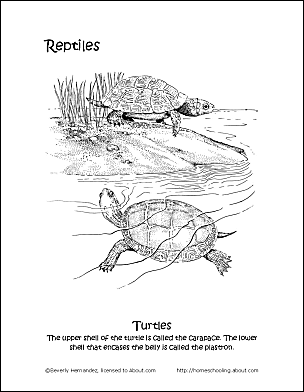 Print The Pdf Turtles Coloring Puzzle And Color Picture Cut Pieces Apart Have Fun Assembling PuzzleUse Your Back Button To Return