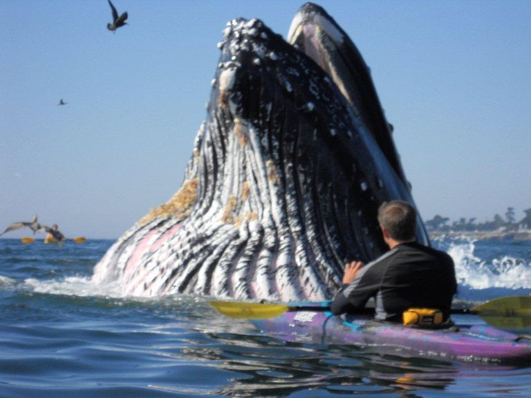 Kayaking with a Humpback Whale