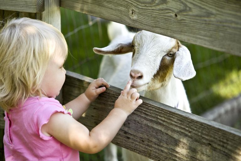 Petting Zoo Child and Goat