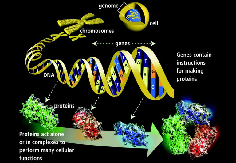 Genes and Proteiins