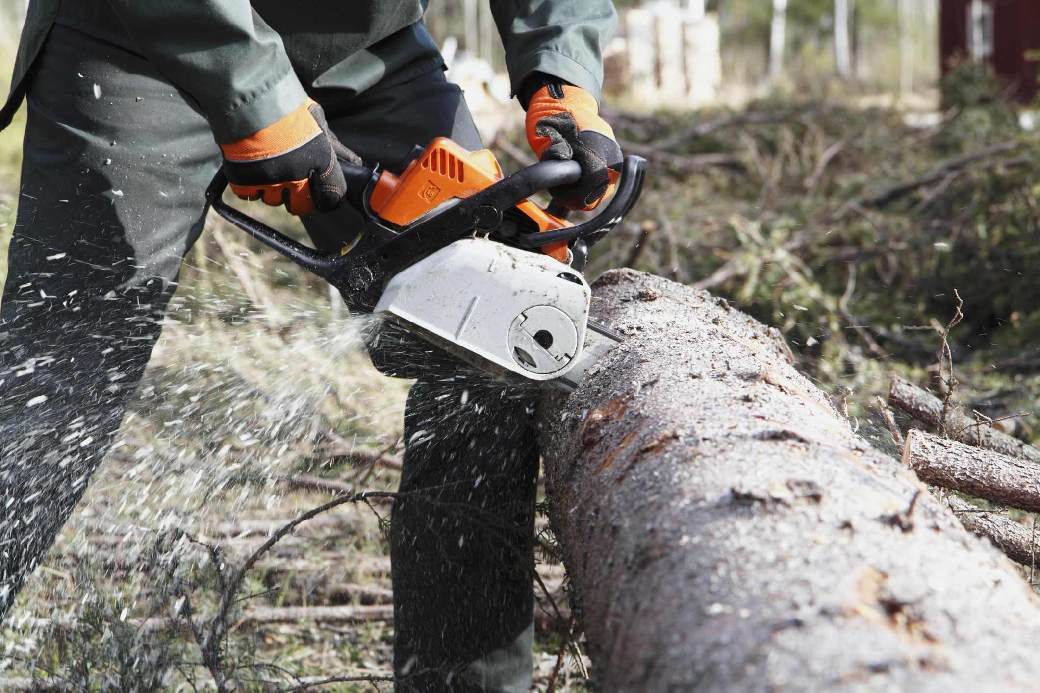 Top 5 Tree Trimming Tools For Landscaping