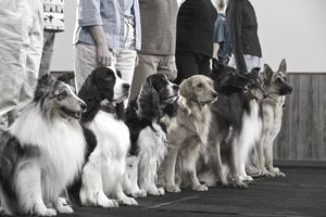 Things You Didn\'t Know About Dog Trainers
