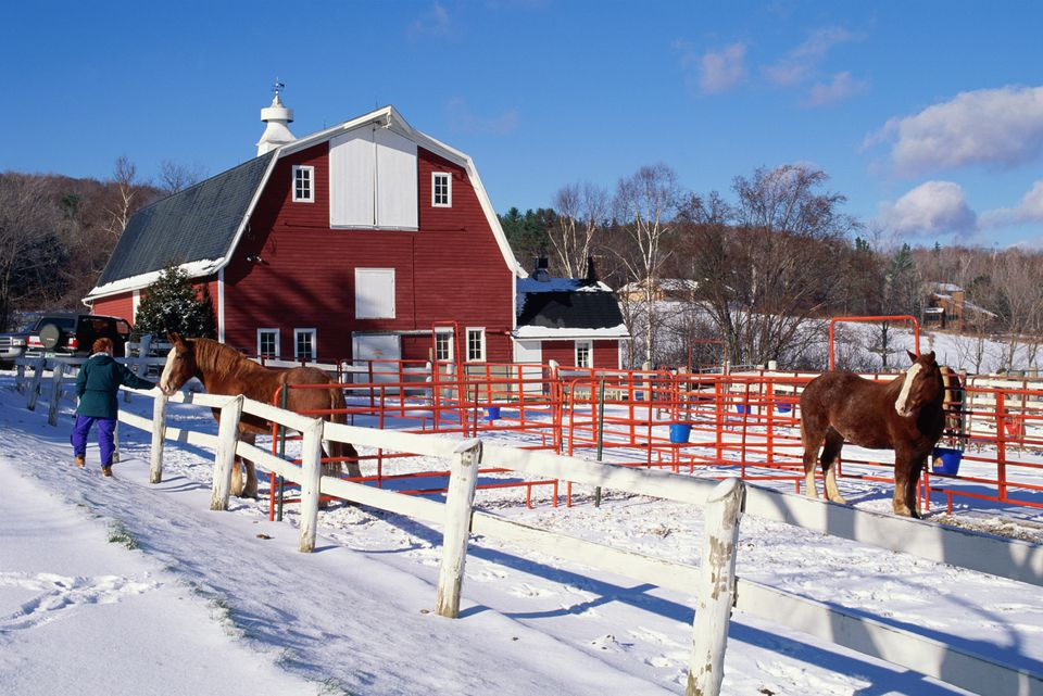 DRAFT HORSES IN BARN YARD IN SNOW IN VERMONT