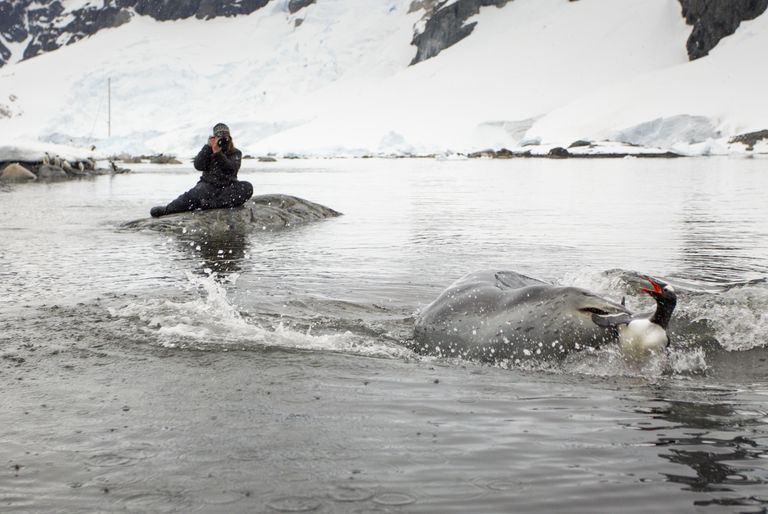 Photographing and studying leopard seals at close range is dangerous.