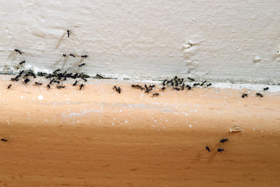 9 simple steps to get rid of ants and keep ants out. Black Bedroom Furniture Sets. Home Design Ideas