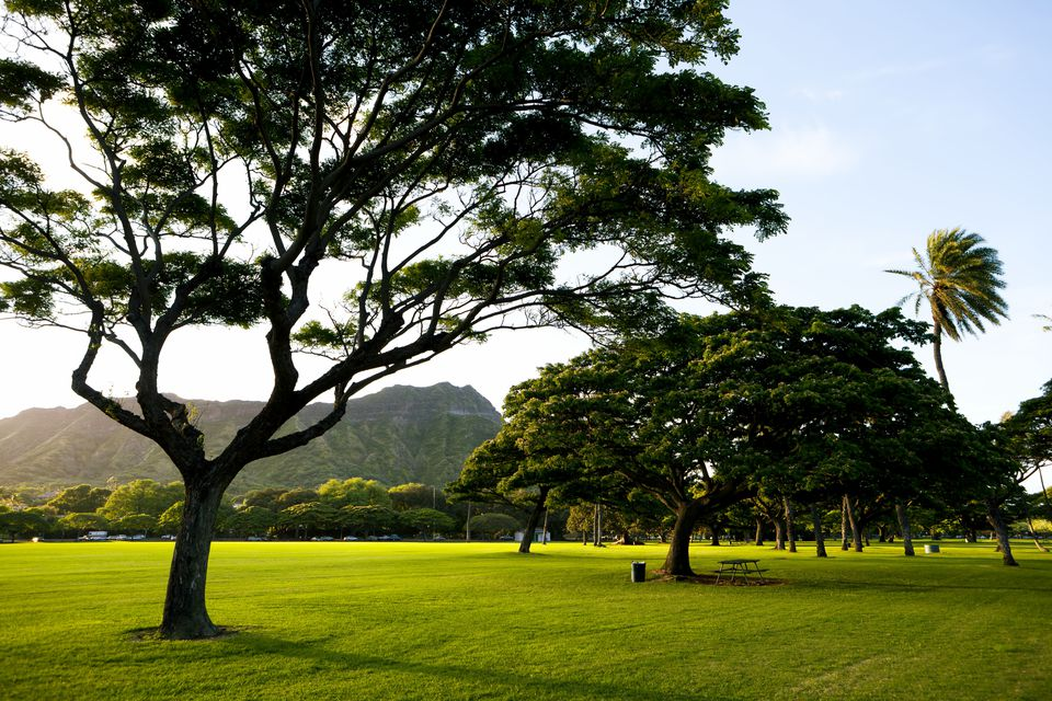 Hawaii, Oahu, Waikiki, Kapiolani Park Just Before Sunset.