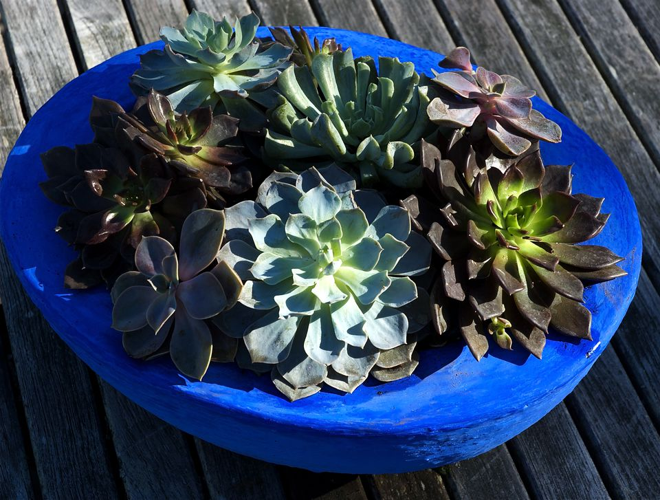 container garden picture of succulent planter