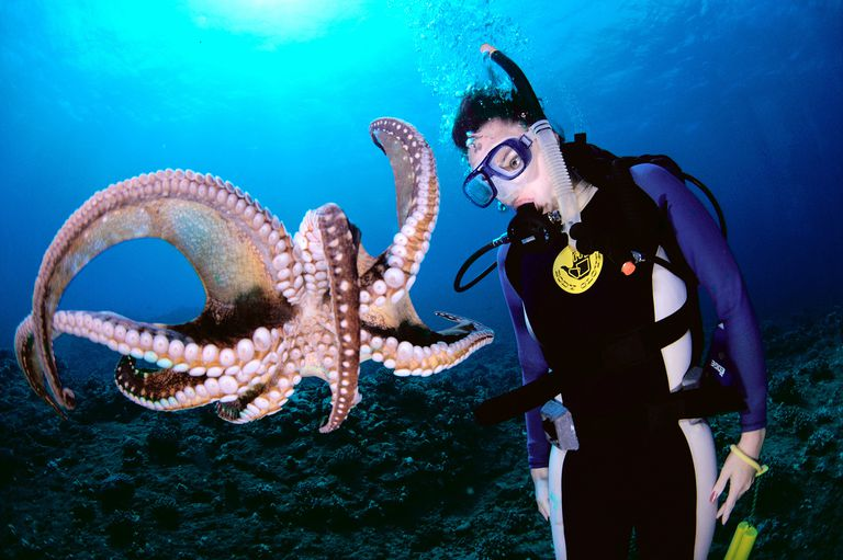Scuba diver and an octopus.