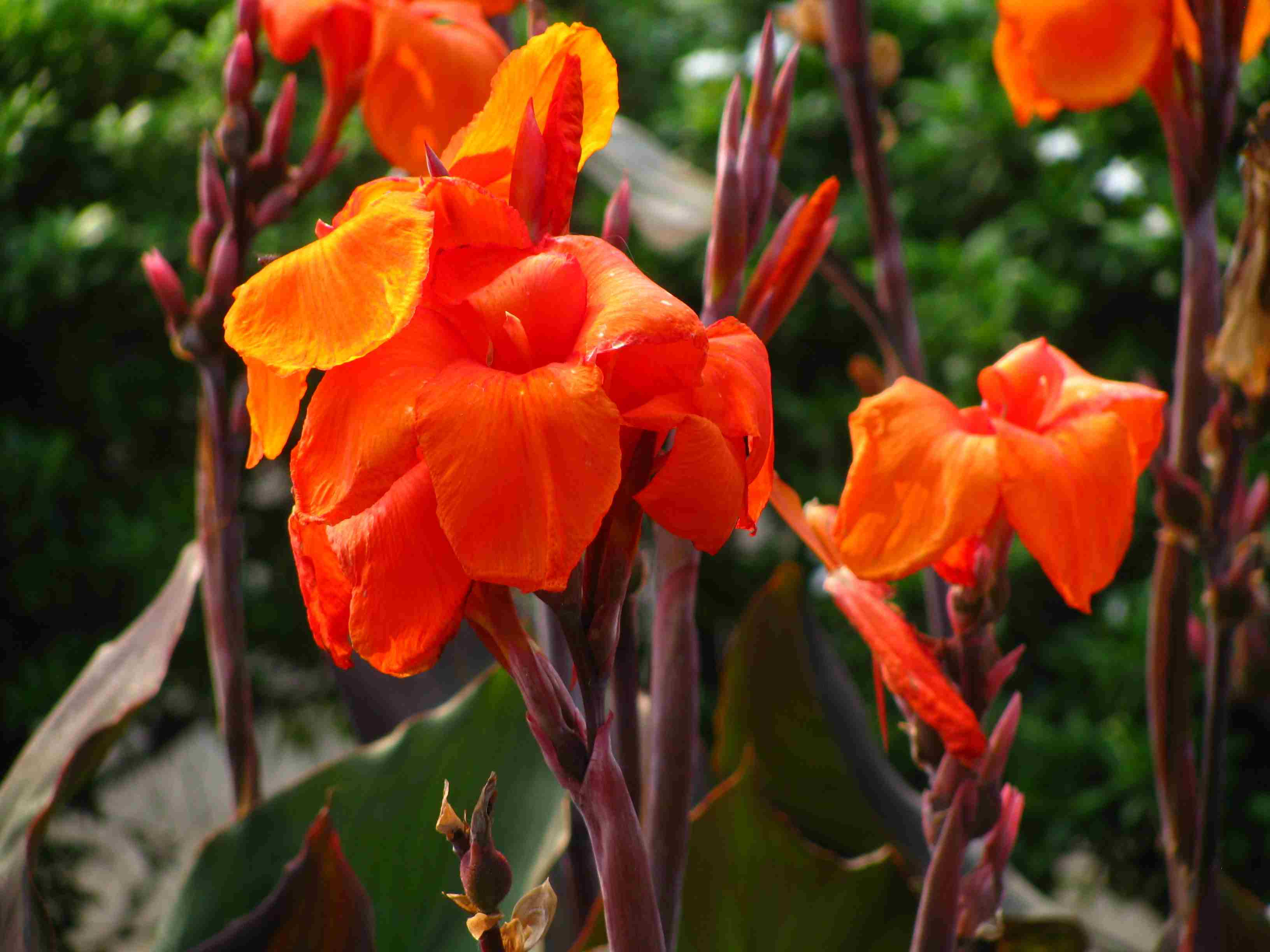 Pictures of orange flower varieties izmirmasajfo Choice Image