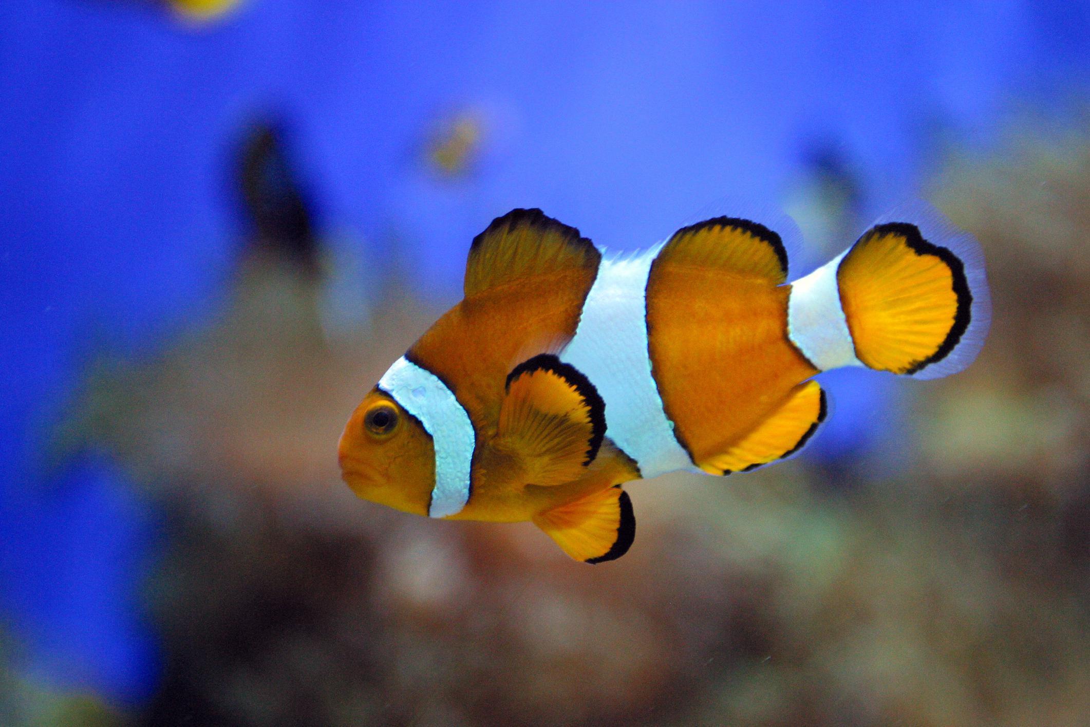 Saltwater Aquarium Ph Control For Dummies