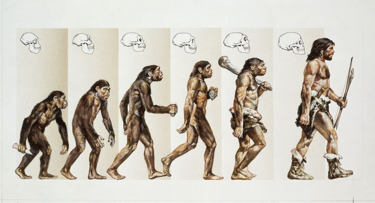 Macroevolution of Hominids