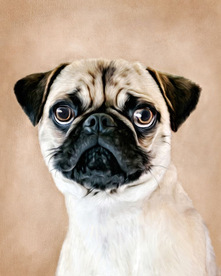 oil painting of a Pug with a brown background