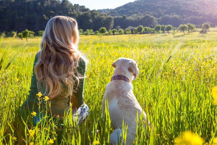 Rear view of mature woman and labrador retriever sitting in sunlit wildflower meadow