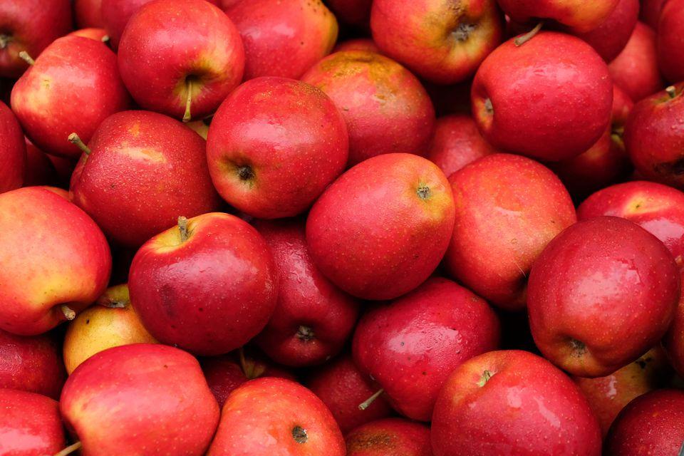 Pick your own apples in Julian, California