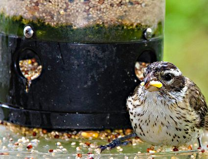 Image Result For Birdseed Wild