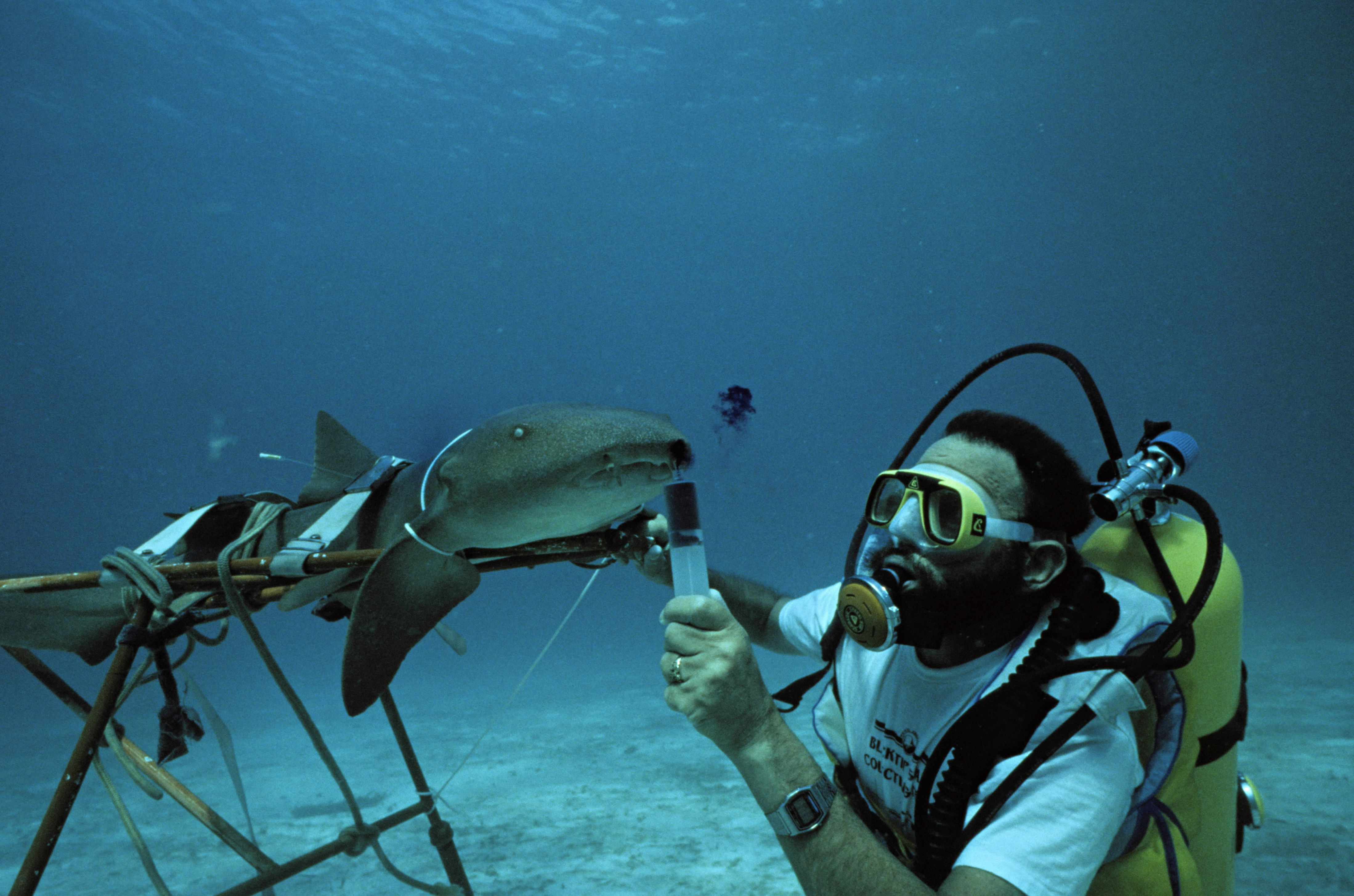 get career info on what it takes to be a marine biologist