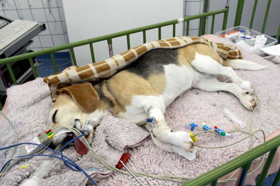 Epilepsy In Dogs Natural Treatment
