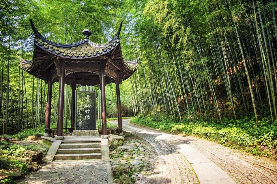 Bamboo Lined Path at Yunqi (Hangzhou)