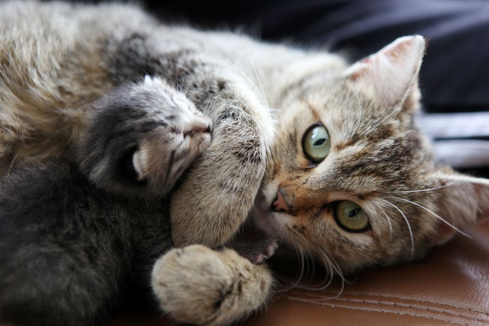 mother cat and her kitten