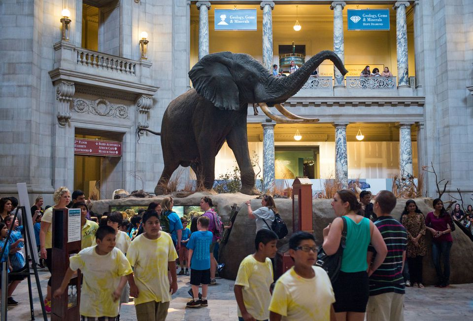 The Smithsonian Institution's Natural History Museum is popular with school groups that visit Washington, D.C.