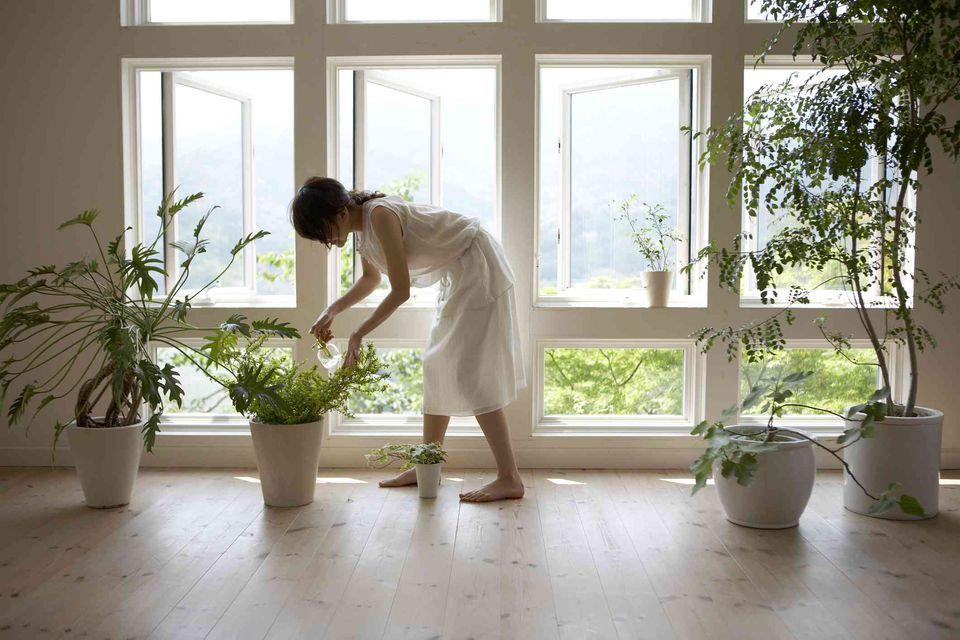 . Good and Bad Feng Shui Plants