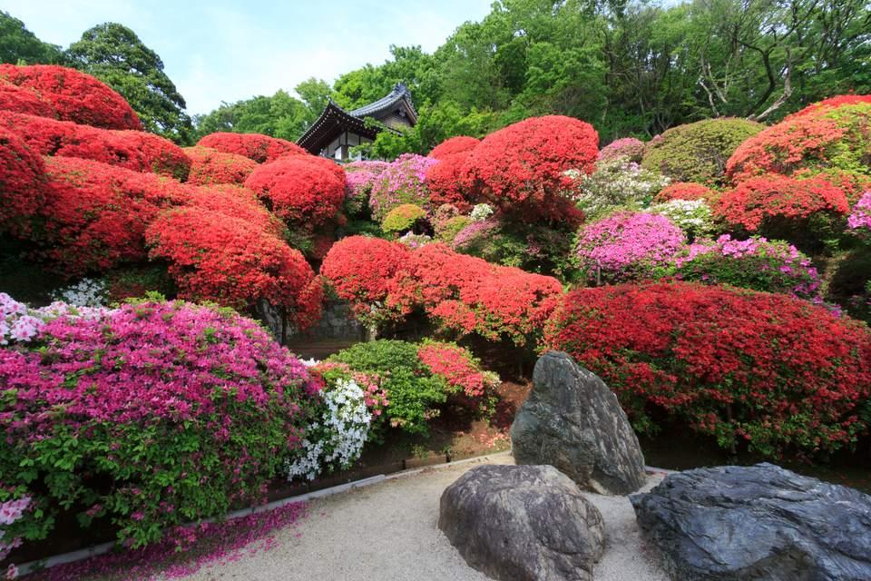 Japanese Azalea Garden