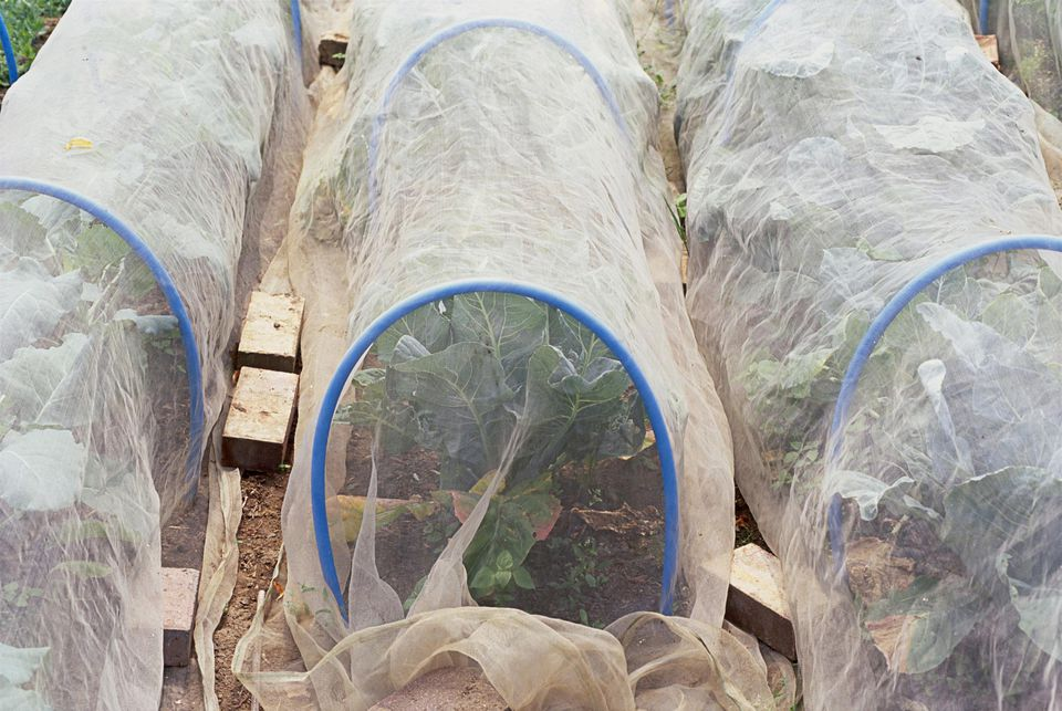 Protective low tunnels for vegetables