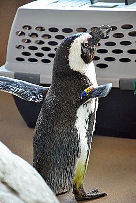 Mystic Aquarium Penguin Encounter