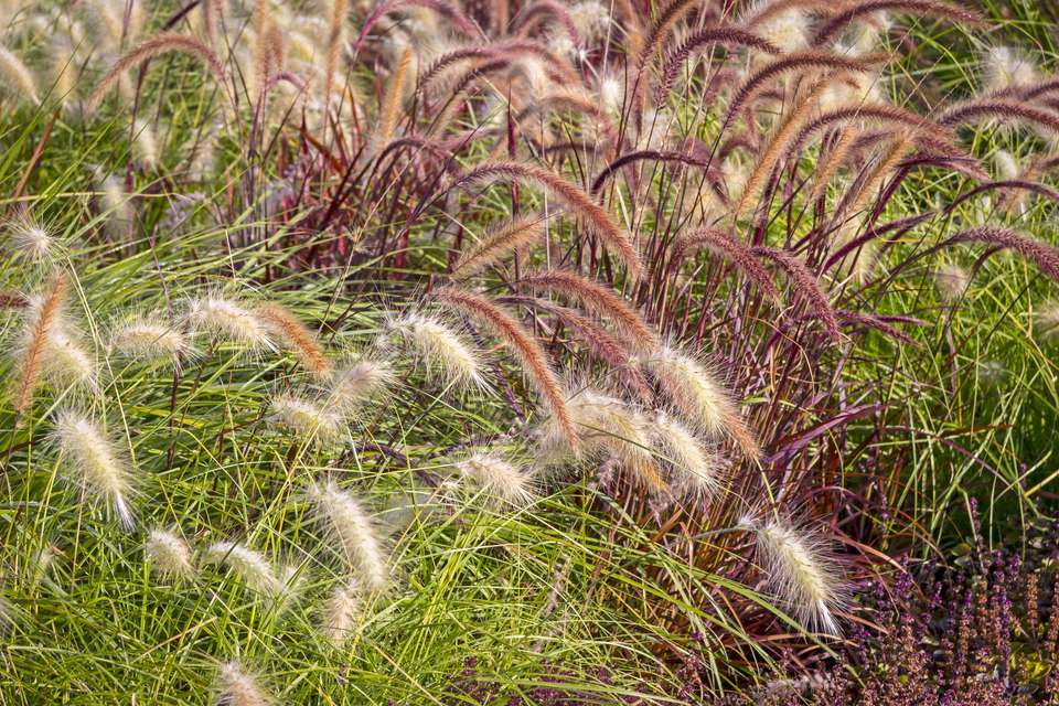 How to choose an ornamental grass for Ornamental grasses for small spaces