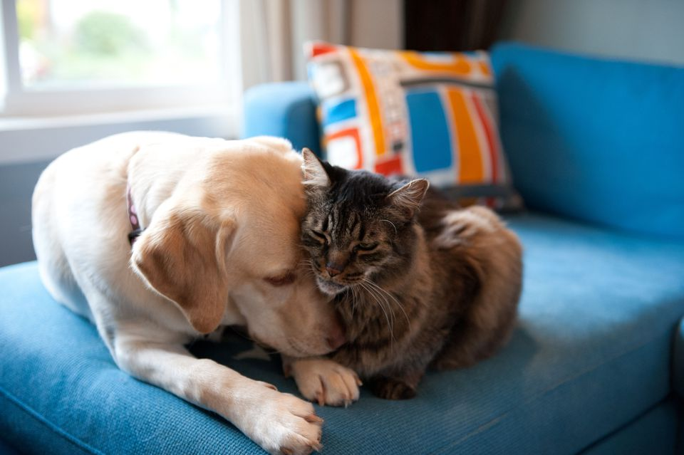 Photo of Dog and Cat Buddies