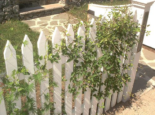 Welcoming vine-covered picket fence.
