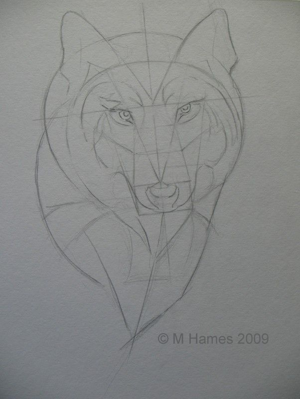 wolf drawing wolf face geometry