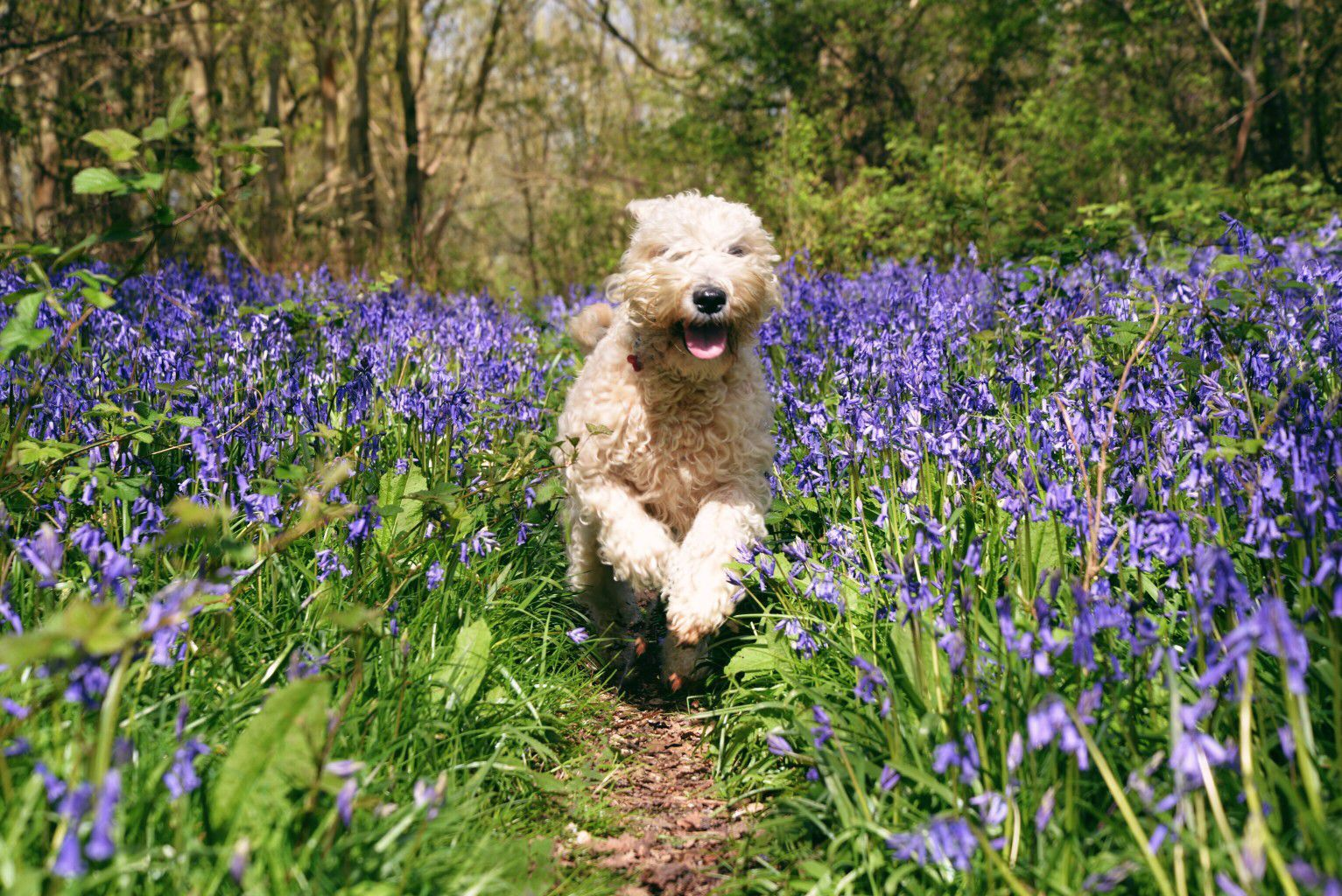 Common Easter Hazards for Dogs and Cats