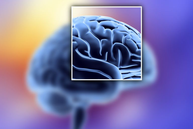Brain Sulci and Gyri