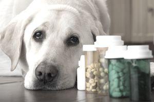 veterinary pharmaceuticals
