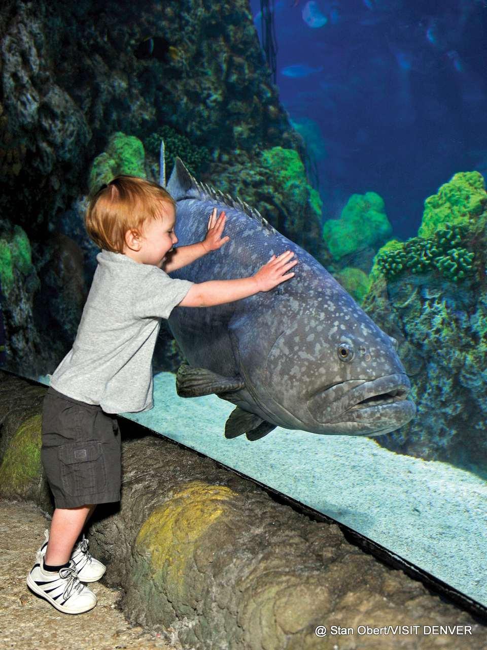 1-Downtown-Denver-Aquarium.jpg