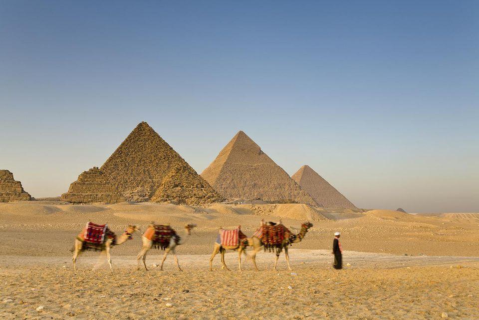 Camel train & driver infront of the Giza Pyramids